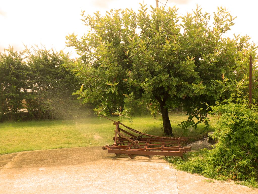 Azienda agricola atzeni i vini della sardegna ogni for Acquisto piante ulivo
